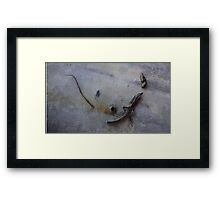 Remains of the Lizard King n°2 Framed Print