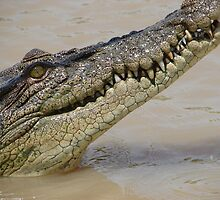 Crocodile in the wild - Kakadu Australia by PevPhot