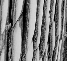 Winter Roof Black and White by iand1982