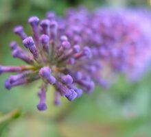 Purple Bullett by MarianBendeth