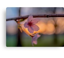 Setting Flowers in Spring Canvas Print