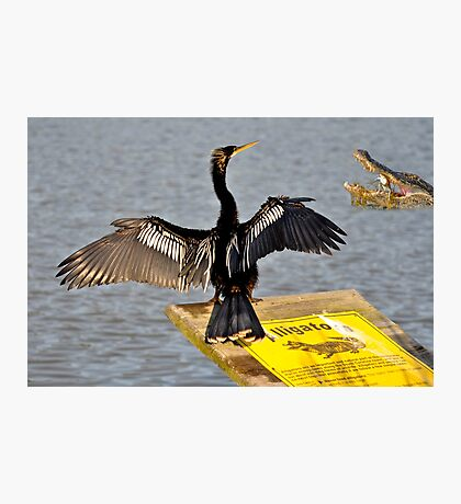 I Guess Anhinga's Can't Read Photographic Print