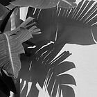 Palm Shadows by Caren Grant