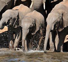 Having a splashing time by Sharon Bishop