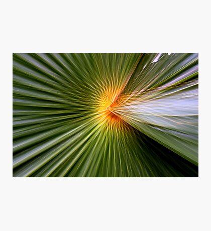 Palm leaf zoom Photographic Print