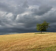 Stormy clouds over a lone tree by peteton