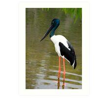Jabiru - black necked stork Art Print
