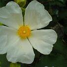 White Little Petal by wannabewriter81