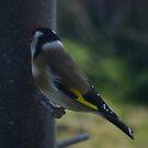 Sweet Beak by wannabewriter81