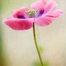 Poppy by Mandy Disher
