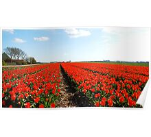 There will always be the tulips Poster