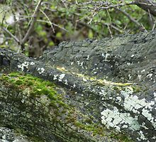 Mossy log by 2HPhotography