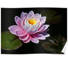 Fractalius Waterlilly Poster
