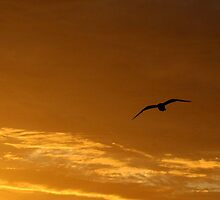 Sunset and seagull by Caroline Anderson