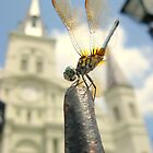 Dragonfly @ Jackson Square by L.D. Bonner