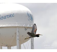 Tricolored Heron in front of Melbourne Water Tower 2 Photographic Print