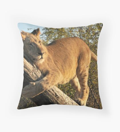 Walking With lions - Victoria Falls, Zimbabwe # 4 Throw Pillow