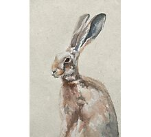 Spring Hare Photographic Print