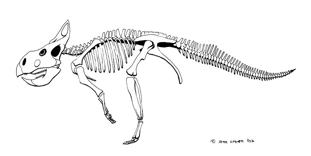 Protoceratops andrewsii, skeleton by Sean Craven