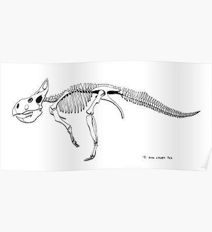 Protoceratops andrewsii, skeleton Poster