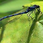Blue Damsel Dragonfly by T.J. Martin