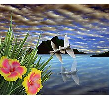 Doves and Hibiscus Flowers on a Tropical Island Photographic Print
