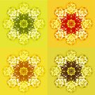 four flowers by Agnew & Roberts