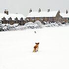 Winter Love by Tom Bosley