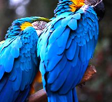 Parrots - Oakland Zoo by alinewton