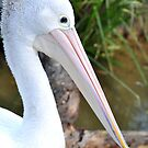 Pelican Eyes by Karina  Cooper
