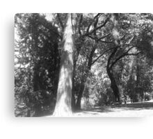 Trees and shadows Canvas Print