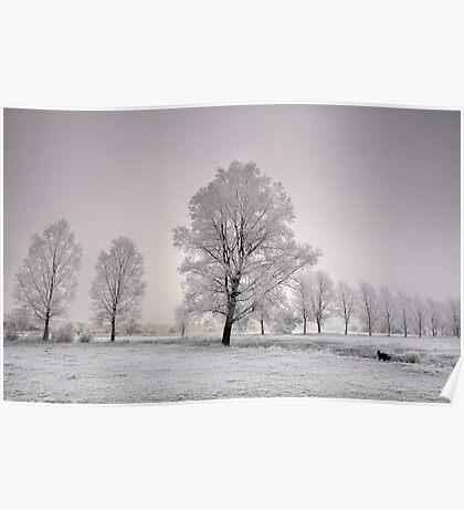 Frosted Willows Poster