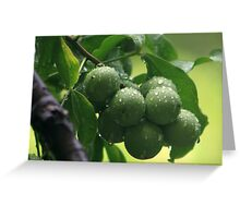 The Green Fruit Greeting Card