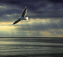 Jonathan Livingston Seagull  by Bob Martin