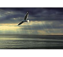 Jonathan Livingston Seagull  Photographic Print