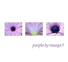 purple by meegs1