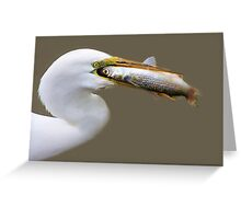 Egret eating a HUGE Fish he had just Caught Greeting Card