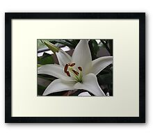 Wonderfully White With Super Stamens Framed Print