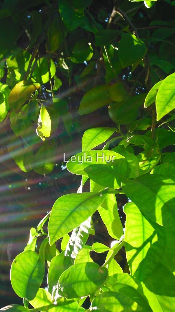 Ray of Sunshine by Leyla Hur