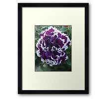 Prettily Purple & White Framed Print
