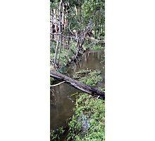 Little Creek Photographic Print