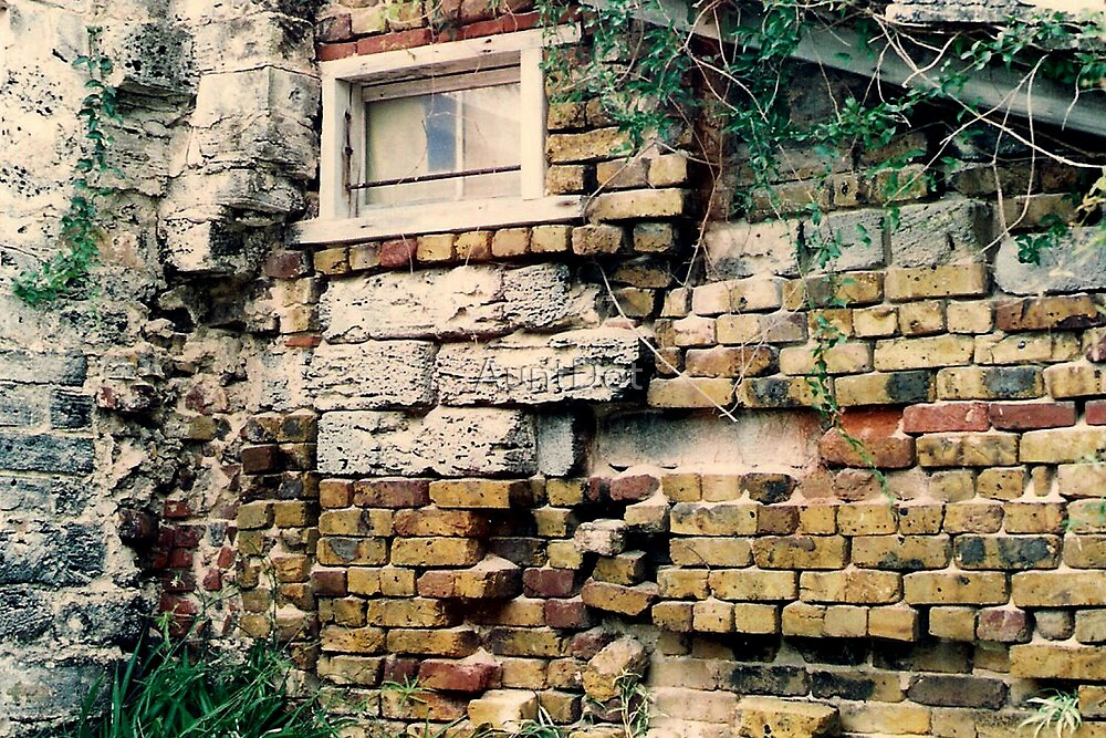 A Wall in Somers Gardens by AuntDot