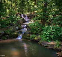 Into the Woods by Herb Spickard