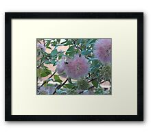 Pale Pink Pleasure Framed Print