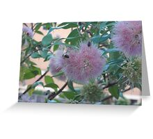 Pale Pink Pleasure Greeting Card