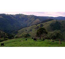 Bovine Views Photographic Print