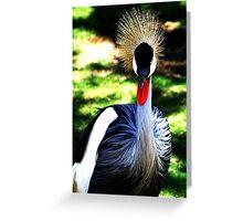 Colourful Bird, San Diego Greeting Card