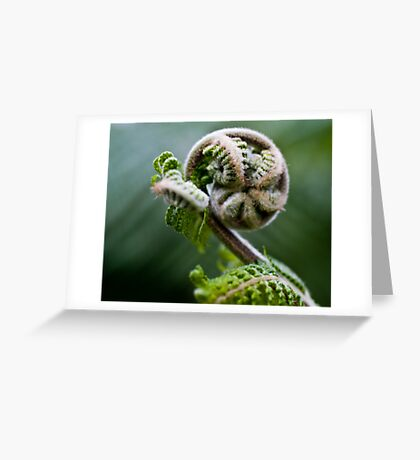 Fern unfurled Greeting Card