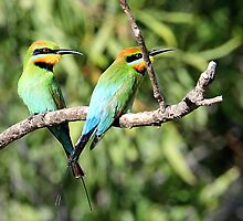 Rainbow Bee-eaters X 2 by bowenite