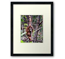 Lonely ape Framed Print
